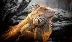 lizard-804114-2048x1365-02